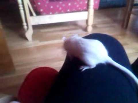 Fluffy the gerbil