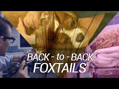 Back to Back Foxtail Removals