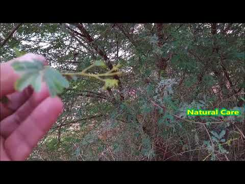 Pure and Fresh Natural Herb for Shining Health and Whole Body System