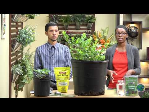 Plants Not Getting The Nutrients  Added;  Adjusting Soil pH