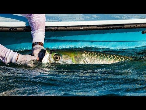 Tarpon Fishing Florida Everglades National Park - 4K