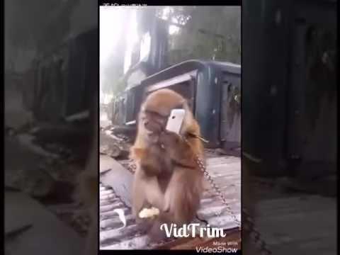 Monkey call And Speak Malaysian Language Must watch