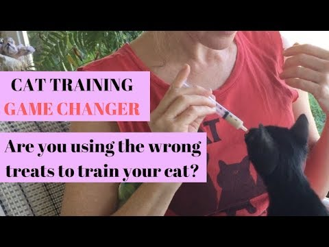 Cat training BREAKTHROUGH! Taming a scared kitten or cat