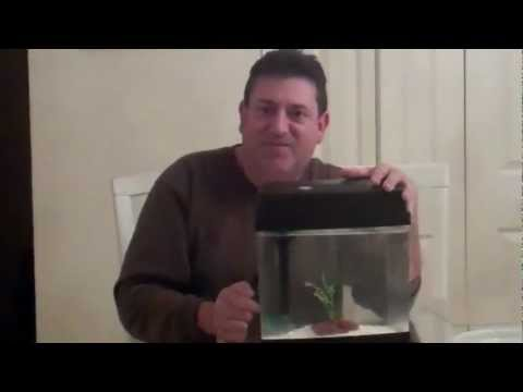 HOW TO KEEP CRAYFISH AS PETS #1