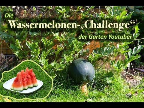 Wassermelonenchallenge Teil 1