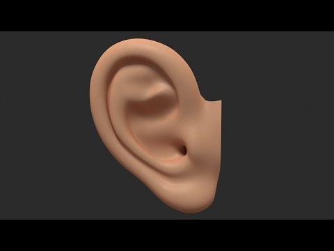 3D Modeling an Ear in 3DS Max