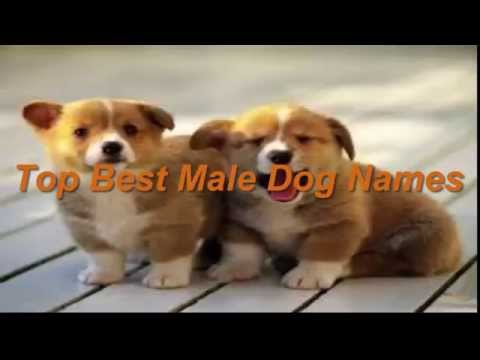 Top Best Male dog names|Popular Pets names
