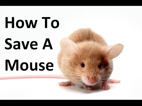 How To Save A Mouse And Other Wild Animals - MUST WATCH