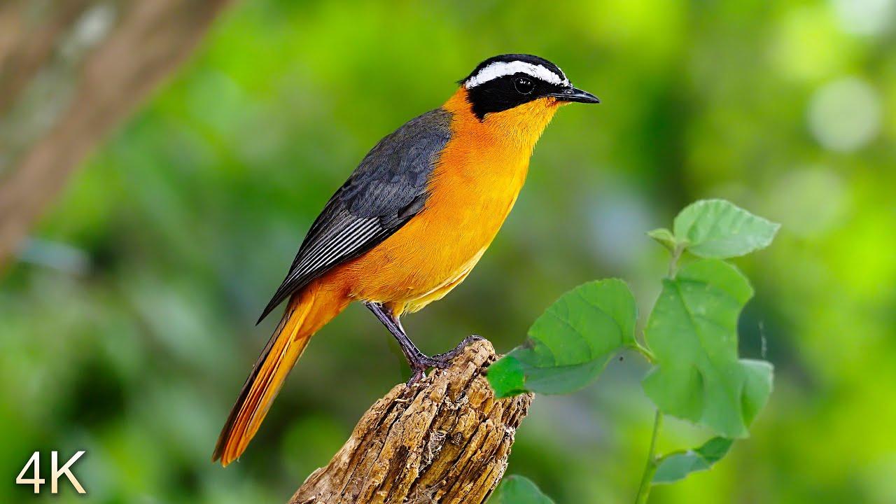 8 Hours of Beautiful Birds (No Music) 4K Nature Relaxation™ - Washington State