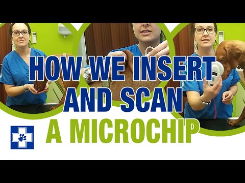 How to insert and scan a microchip