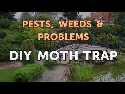DIY Moth Trap