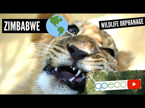 Volunteering in Zimbabwe at an African Wildlife Orphanage | GoEco