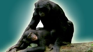 How do animals have sex? | Earth Unplugged