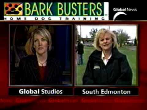 Dealing with Dog Misbehaviour on Global News Edmonton