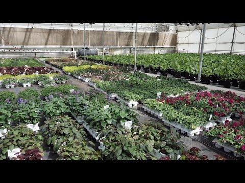 Picking up annuals! 😍🌿🙌// Garden Answer