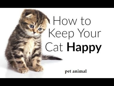 How To Keep Your Cat Happy!