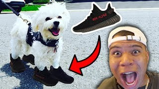 I BOUGHT MY PUPPY YEEZYS!! ($3,000 SUPER RARE SHOES)