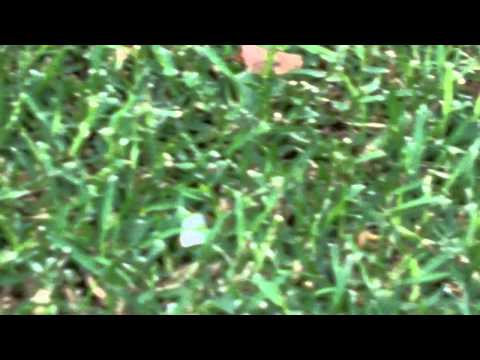 [What Grass Is That] [Buffalo Lawn Care] [Couch Lawn Care] [Bermuda Grass Lawn Care]