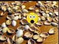 Download Video Download Increible !! Con cáscaras de pistachos. Los Hobbies de Yola 3GP MP4 FLV