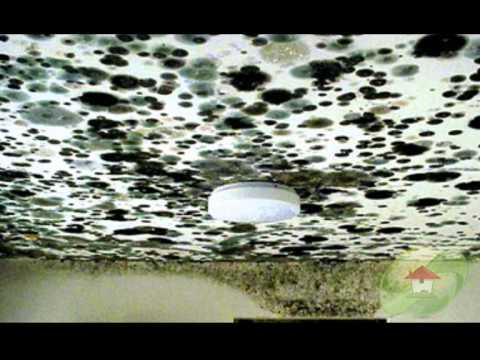 Symptoms of Black Mold