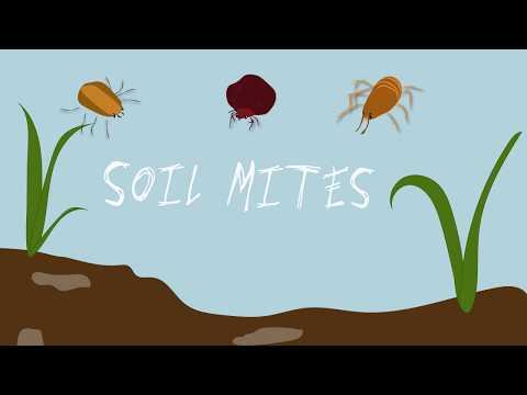 Soil Mites