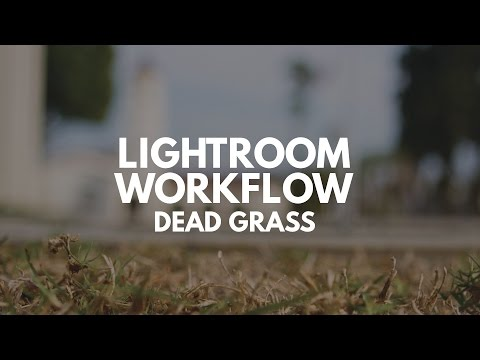 Lightroom Photo Editing Workflow: Dead Grass