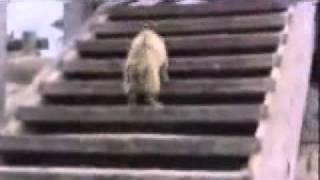 Animal Fail