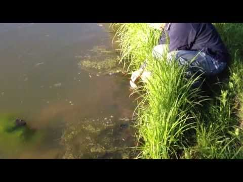 Catching Bass and Bluegill in our Pond - Pond Expansion Progress - ATV Ride