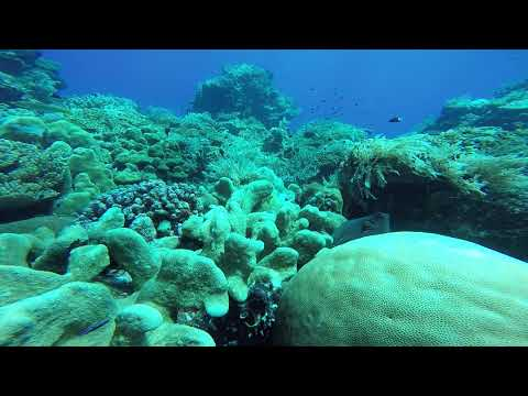 Octapus Forgotton Islands