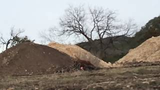 9 hogs blown up by tannerite slow mo