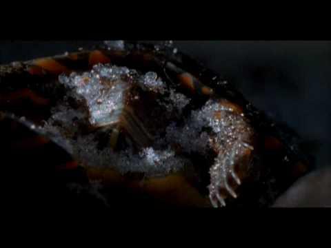 Turtles survive being frozen