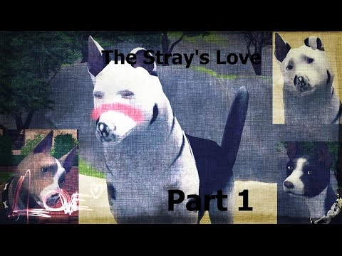 The Stray's Love Part 1