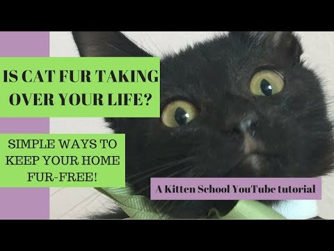 How to Keep the CAT FUR under control - Easy Tips!