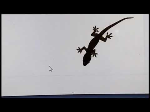 House Gecko / Lizard follows Mouse Pointer