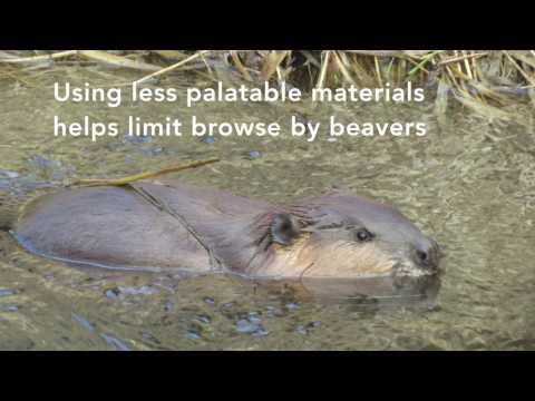Beaver Dam Analogues - A Visual Tour of Triple Creek
