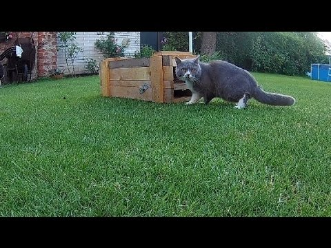 Trap on cats with simple mechanism.  TESTED