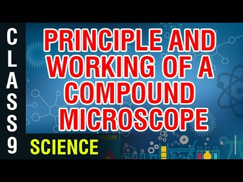 Principle And Working Of A Compound Microscope | 9th Class Science | Digital Teacher