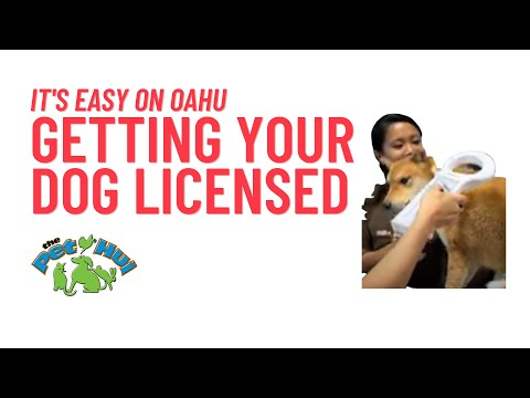 How to license & register your dog in Honolulu!