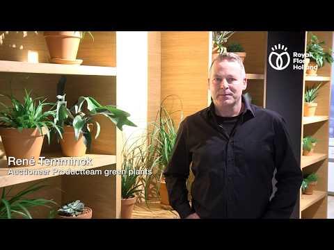 The Auctioneer speaks: Vlog#5 Green houseplants