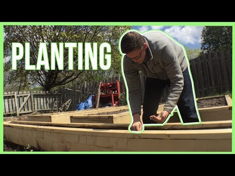 Planting Seeds in the Garden and Raised Beds