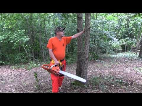 QDMA Deer Habitat Workshop: How to hinge cut trees safely