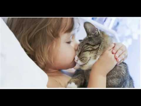 The 10 Incredible Ways Your Cat Shows You Love ( Cat Lovers must watch this Video)