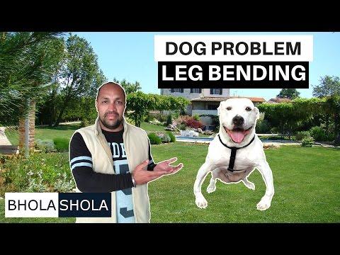 Problem - Bending Dog Legs - Bhola Shola