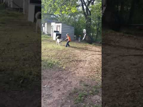 Xxx Mp4 Kid Vs Dog Fail Yes He 39 S Fine 3gp Sex