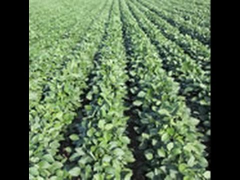 Utility Sales Tax Exemption for Texas Agriculture Operations