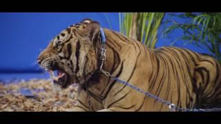 TIGER vs VIKRAM PRATAP SINGH MAKING