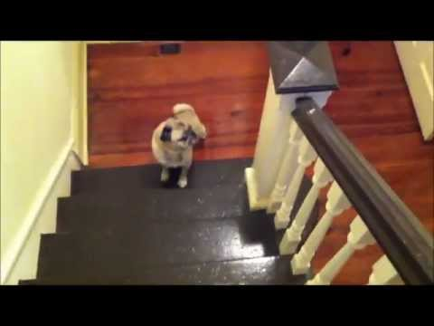 How The Pug Handles Moving