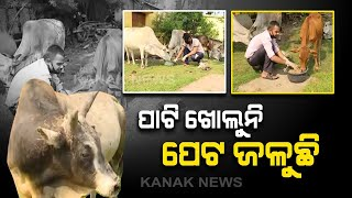 COVID-19 Lockdown: Social Workers Providing Foods To Stray Animals In Cuttack