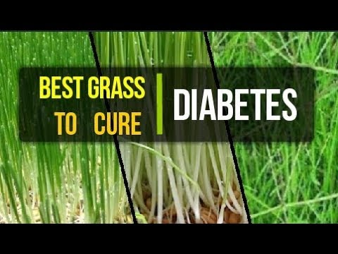 Best Grass To Cure Diabetes | Grass Juice For Diabetics