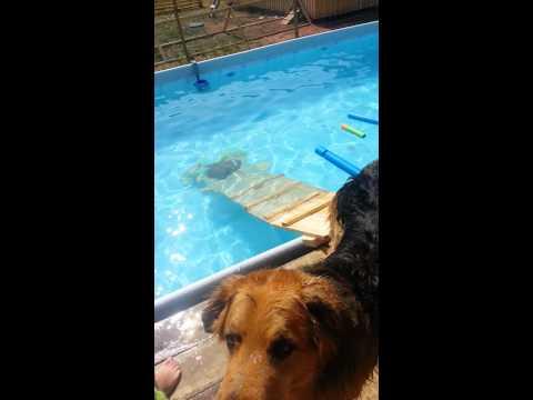 Dog Pool Ramp